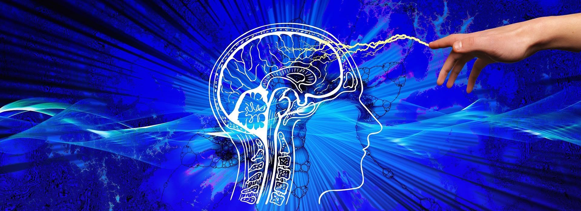 Gehirn-ANSA-Header-1920x700